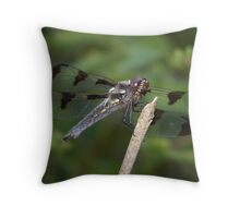 A twelve spotted skimmer?  Throw Pillow