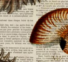 nautical french botanical art vintage compass sea shells  Sticker