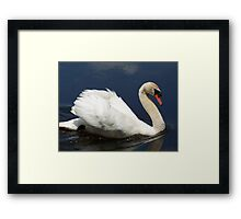 Beautiful Mute Swan darting off to chase a goose. Framed Print