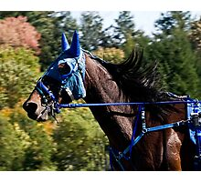 The Masked Wonder Horse Photographic Print