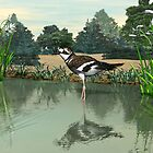Killdeer by Walter Colvin