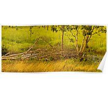 The fallen tree in Kakadu Poster