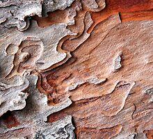 Lisbon Bark 2 by Haydee  Yordan