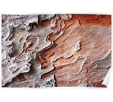 Lisbon Bark 2 Poster