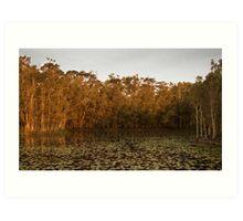 Arrawarra Lagoon Art Print