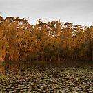 Arrawarra Lagoon by Leanne Nelson