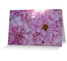 Pink-Purple Carnation-(Floral Macro) Greeting Card