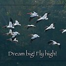 Dream Big! Fly High! by Bonnie T.  Barry