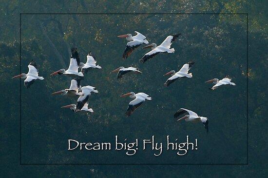 Dream Big! Fly High! by Bonnie T.  Barry
