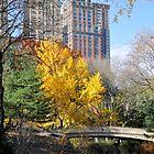 Gothic Bridge Central Park by joan warburton