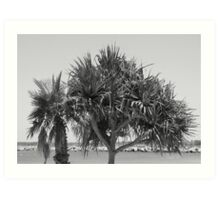Iluka Bay-(Pandanas View)-B&W Art Print