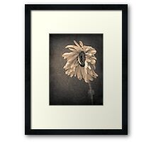 Wilting in Colour Framed Print
