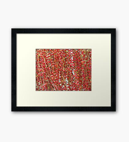 Red Palmn Fruit-(Macro) Framed Print