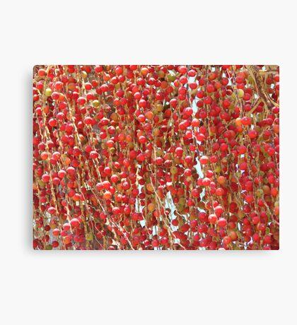 Red Palmn Fruit-(Macro) Canvas Print