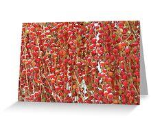 Red Palmn Fruit-(Macro) Greeting Card