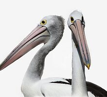 Pelican Mugshot by Tainia Finlay