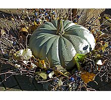 Autumn gourd  Photographic Print