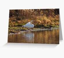 Return of the Mute Swan Greeting Card