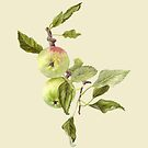 Apples on Bough by Maureen Sparling