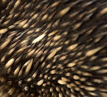 Echidna by Helen Greenwood