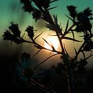 The Sad Garden Series VI by phantomorchid