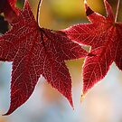 Red Autumn II by bkphoto