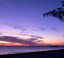 Pure Purple on Heron Island by melodyart
