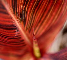 Varigated Canna Lily Leaves by TeAnne