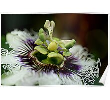 Passion Flower 2 Poster