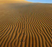 Australia Desert by Anton Gorlin