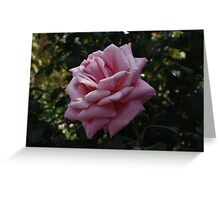 Pink Rose in Arlington Cemetery Greeting Card