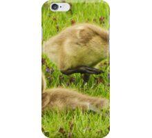 Canada Goose Goslings iPhone Case/Skin
