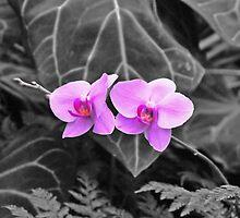 Orchids in bloom by Walt Conklin