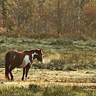 Chilly Horse by Debbie  Roberts