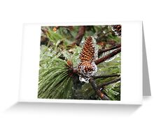 Iced Pinecones Greeting Card