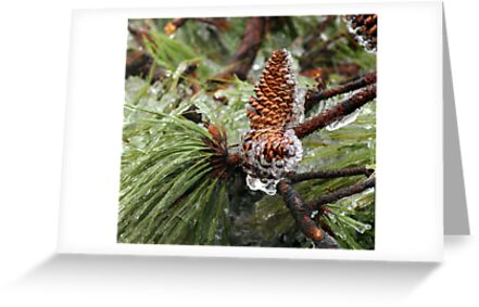 Iced Pinecones by Ruth Lambert