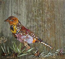 Bird Barbet by BasantSoni