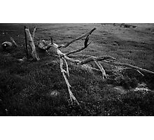 Dead Branch BW Photographic Print