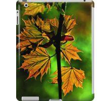 New England Maple iPad Case/Skin