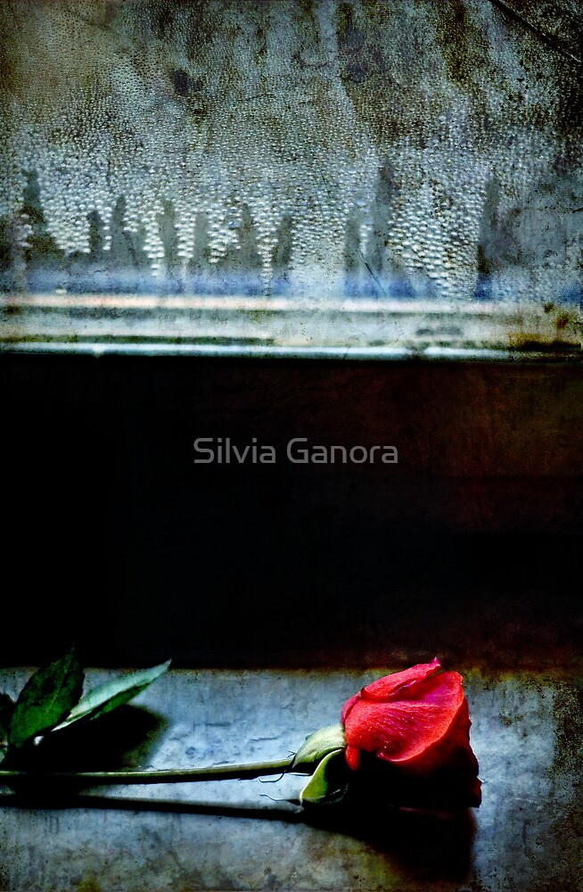 Misty rose II by Silvia Ganora