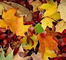 Autumn Moods 19 by Rodney Williams