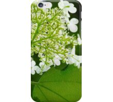 Our Father ~ Matthew 6:9 iPhone Case/Skin