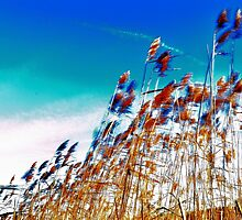 Windy Rush! by NaturesEarth