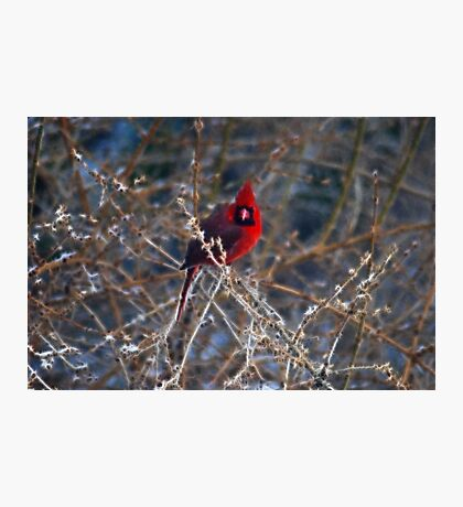 Christmas Bird Photographic Print