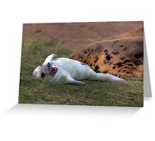 The Donna Nook Grey Seal Colony Greeting Card