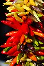 Hot by John Schneider