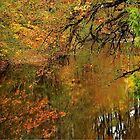 Reflections of Autumn by NancyR