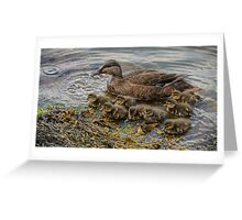 Mother duck & ducklings Greeting Card