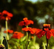 Orange garden by Ghelly