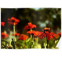 Orange garden Poster